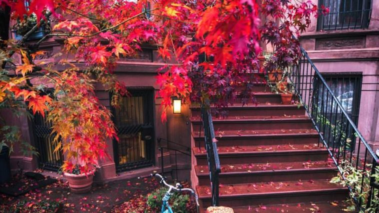 Cobble Hill, Brooklyn by Vivienne Gucwa