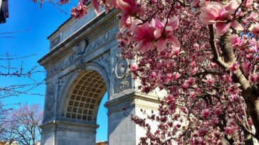 Blossom at Washington Square Park by @scottlipps #Spring