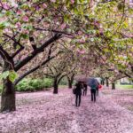 Brooklyn Botanical Garden by Javan NG