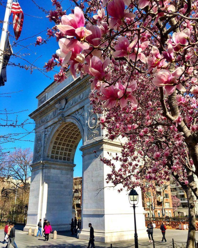 Blossom at Washington Square Park by @scottlipps #Spring